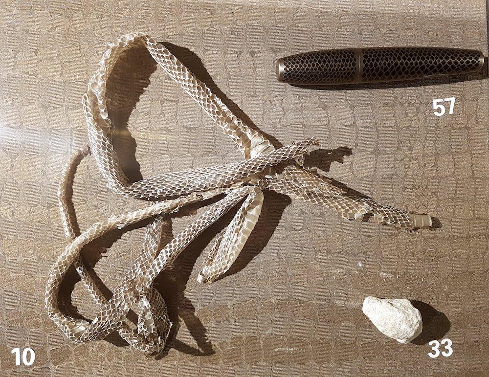 SnakeShow_Fragmenta-Malta_PicBettinaHutschek_08